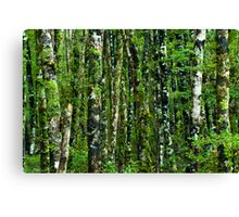 green forest background Canvas Print