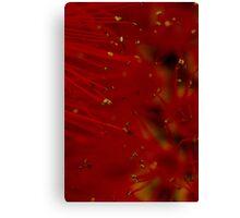 red macro Canvas Print