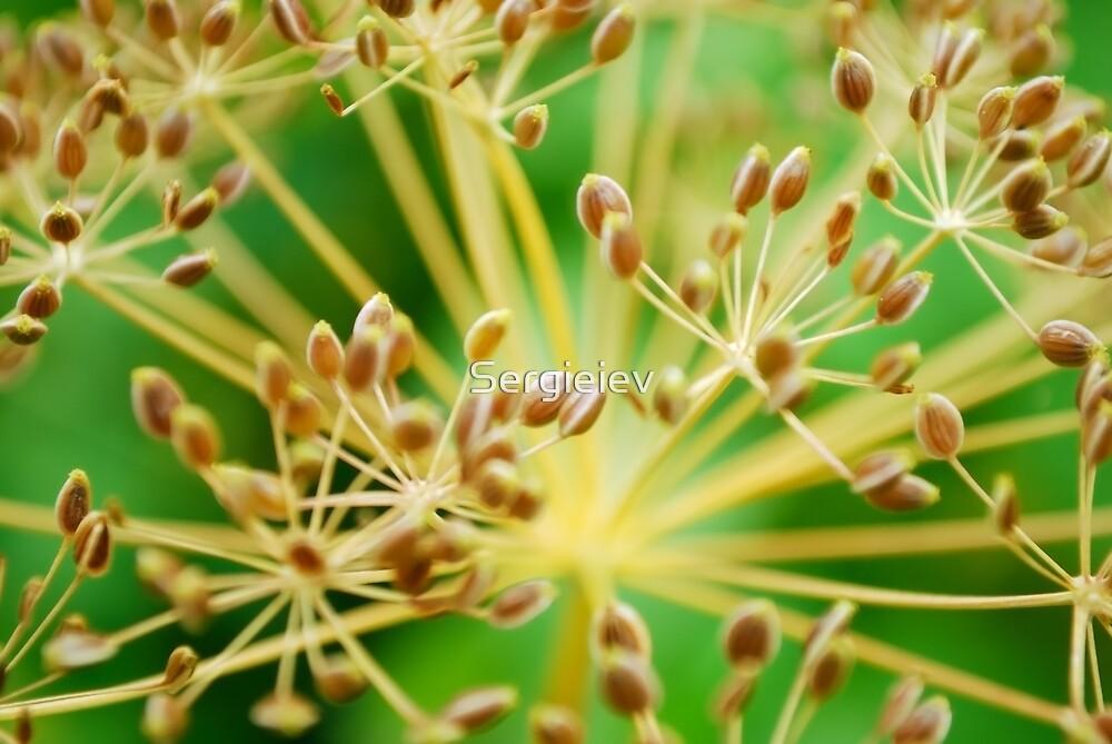 brown vegetative background by Sergieiev