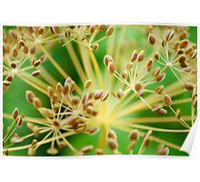 brown vegetative background Poster