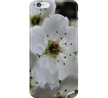 Spring in Suburbia iPhone Case/Skin