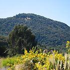 Sonoma California Vineyard Grounds by Zehda