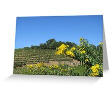 Sonoma California Vineyard With Daisies Greeting Card