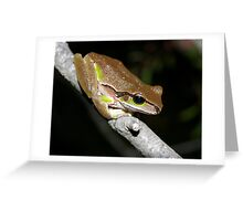 Litoria citropa Blue Mountains Tree Frog Greeting Card