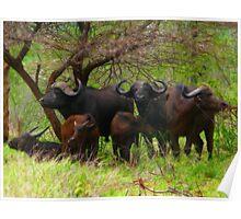 Family Portrait, Kruger National Park, South Africa Poster