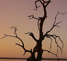 Lake Bonney Tree by Greg Eyre