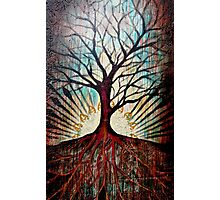 Tree of Knowledge Photographic Print