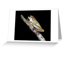 Blue Mountains Tree Frog  Greeting Card