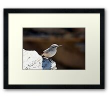 Rock wren Framed Print