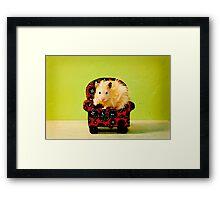 Comfy Hamster Framed Print