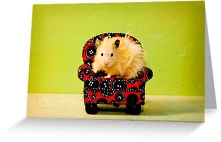 Comfy Hamster by Avonlea