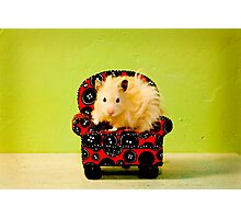 Comfy Hamster Photographic Print