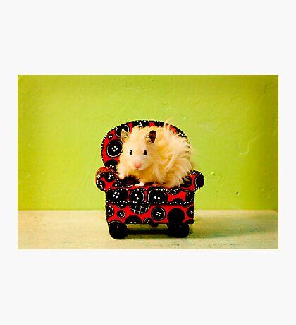 Comfy Hamster Photographic Print