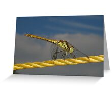 Dragonfly on washing line Greeting Card