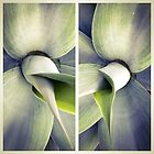 Succulent Pair by Barbara Wyeth