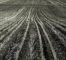 Ultra Deep Field by Larry  Stewart