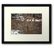 Give it up, Fuzzy-tail, you're surrounded! Framed Print