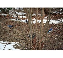 Give it up, Fuzzy-tail, you're surrounded! Photographic Print