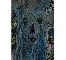 Ponderosa Pine Tree Photographic Print