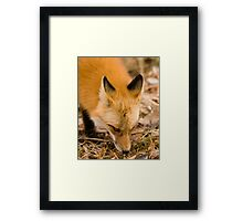 Following a Scent Framed Print