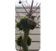 Tree limbs with moss iPhone Case/Skin