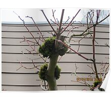 Tree limbs with moss Poster