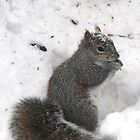 Snowy Squirrel by Geno Rugh