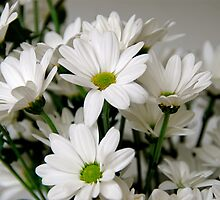 White Daisies by Mary Canning