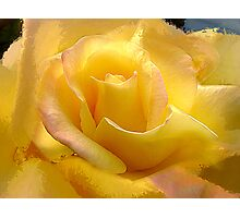 Yellow Rose by the Liquor Store Photographic Print