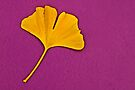 Ginkgo Compliment. by Todd Rollins
