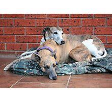 m&d Cleo & Connor November Photographic Print