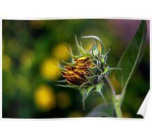 Baby Sunflower Poster