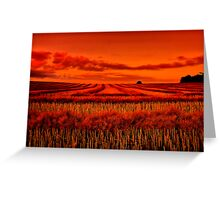 """""""Morning!! - After The Harvest"""" Greeting Card"""