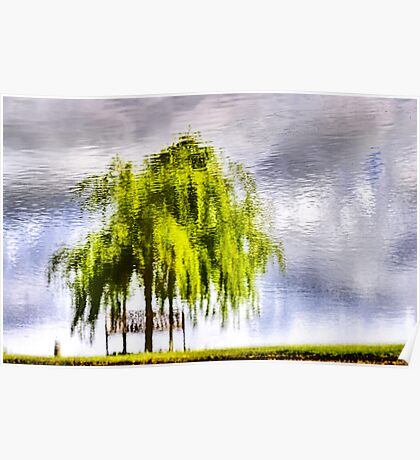 Pond Willow Poster