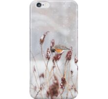 Robins in Winter1 iPhone Case/Skin