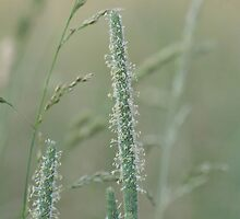 Prairie grass 2 by Linda Jackson