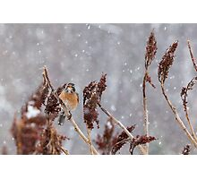 Robin in Winter 7 Photographic Print