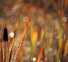 Cattail Morning by Bill Morgenstern
