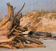 Cumberland Driftwood by Susan Gottberg