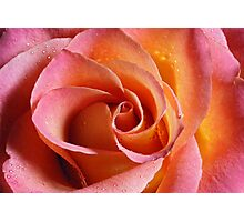 Candy Rose Photographic Print