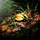mushroom in light by terrebo