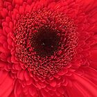 Red Flower Macro  by AuntDot