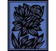 Litzau Daffodil Flowers Blue Black Photographic Print