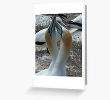 Courting Gannets Greeting Card