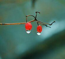 Berries by vbraucci