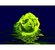 Rose #4 Photographic Print