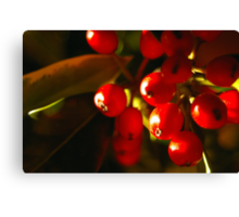Sweet Holly Canvas Print