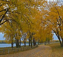 Lake Yankton in Autumn by Dawne Olson