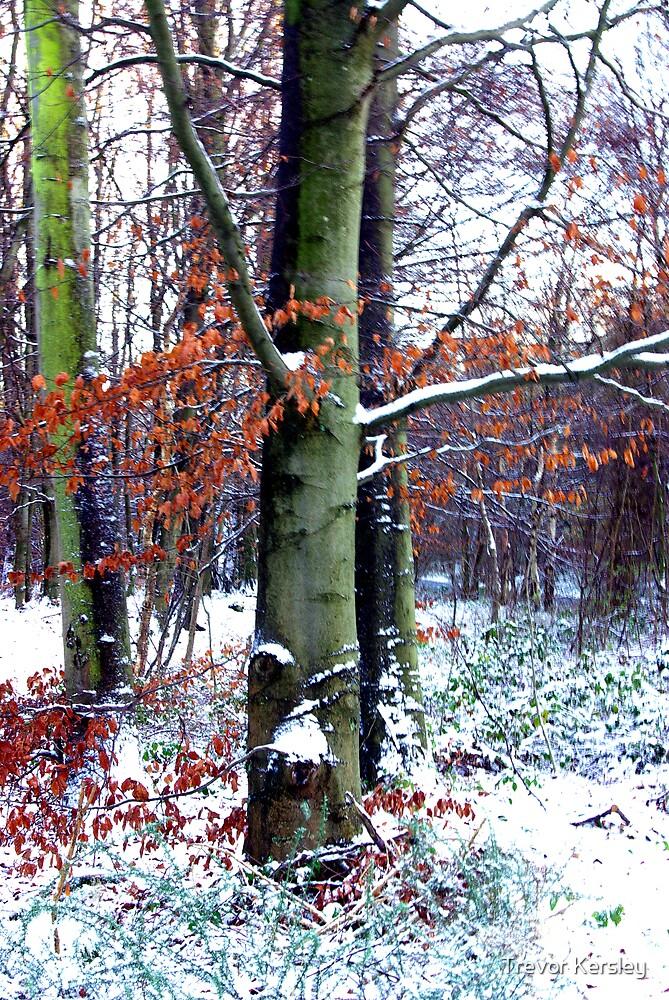 Winters Leaves by Trevor Kersley