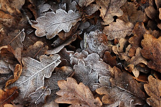 Winter Leaves by Lucy Hollis